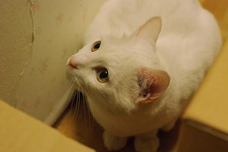 2015年08月05日のシロちゃん(メス2歳)