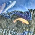 鯉の水中花