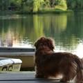 Photos: おじさんボート乗りたいだけど.....終わったの?