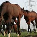 写真: 馬、馬、馬.....急接近これが限界ギリギリ(((・・;)