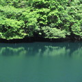 貯水池の木々