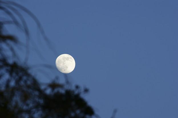 伊良子岬の月