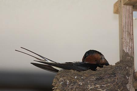 抱っこしながら羽つくろい