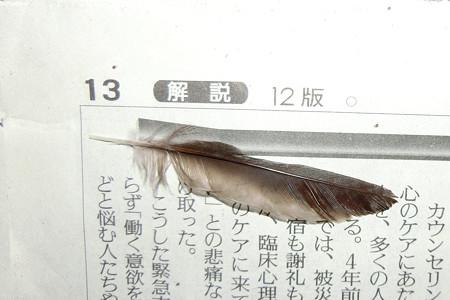 ツバメの羽