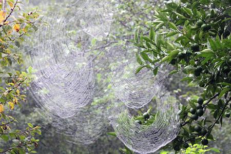 雨の日のクモの巣