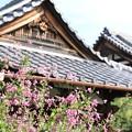 IMG_2317常林寺・萩