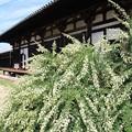 IMG_2727元興寺(極楽坊)・萩と極楽堂(極楽坊本堂)(国宝)