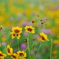 河川敷の花