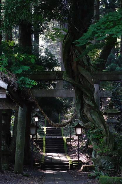 古代への道