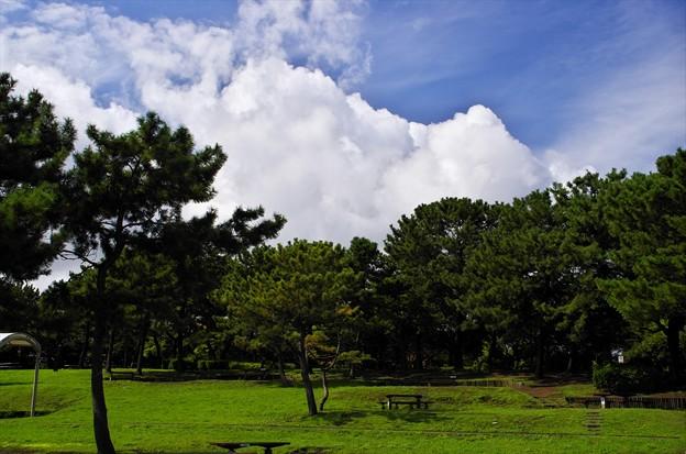 2015晩夏05八景島・海の公園「雷雨注意報」