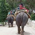象さんにのって