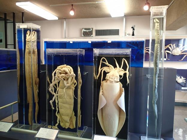 横須賀自然・人文博物館