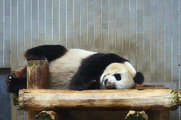 パンダも暑い・・・