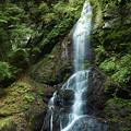 Photos: 留春の滝