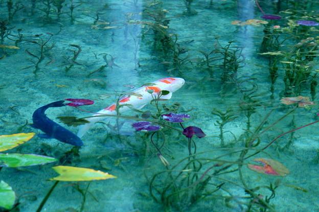 モネの池にて 2