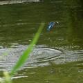 Photos: お魚ゲットな