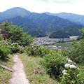 Photos: あじさい祭り2015.06-26