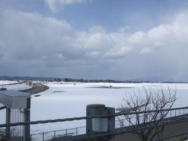 越後平野も下越では雪の厚みは薄くなり