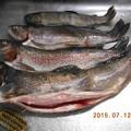 写真: ヒメマス 息子が釣った魚達