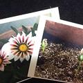 Photos: プリンタについてた ハガキサイズの写真用紙