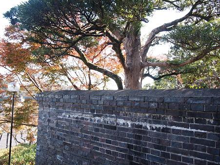 内藤記念館 紅葉