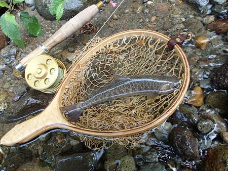 某渓で釣れたイワナ1