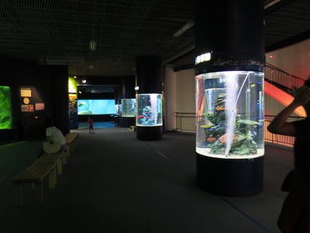 上越市立水族博物館 入ってすぐの様子