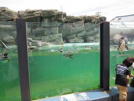 上越市立水族博物館 ペンギンランド