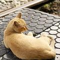 11月4日十分駅猫