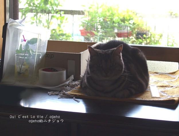 見守る猫。興味の湧く匂いがするらしい。