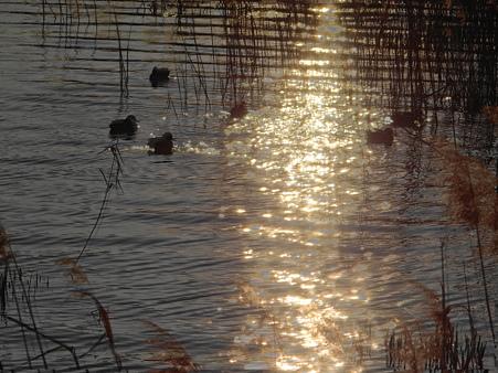 夕暮れの八ッ谷池