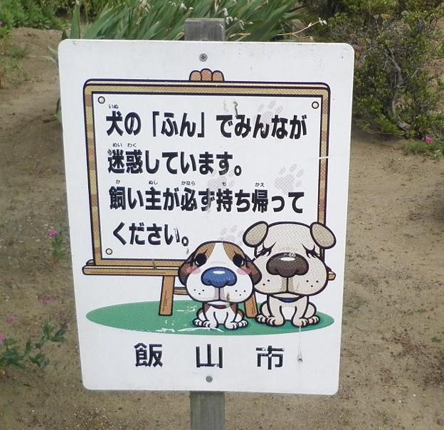 犬糞~飯山市