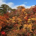紅葉狩り・鳴子峡