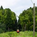 木立の中からキハ