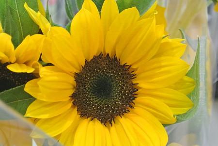 花売り場のヒマワリ