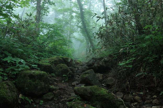 雲の中の森