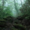 Photos: 雲の中の森