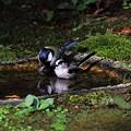 Photos: 露天で混浴~♪
