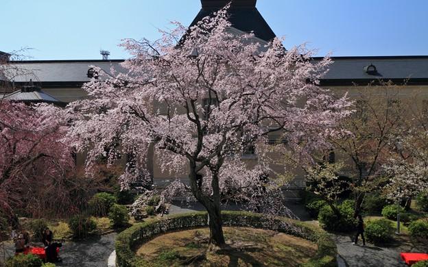 写真: 京都府庁・旧本館22