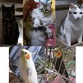 Photos: 2012動物