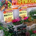 Photos: 9/23某ホムセン5