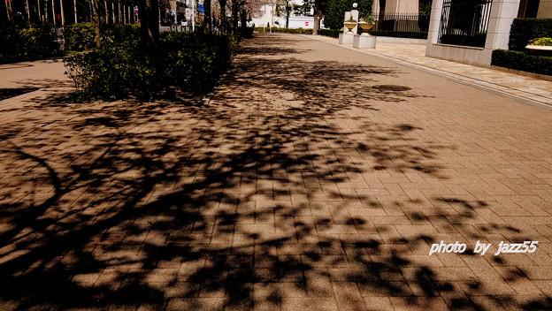 フォト蔵路面に 影を落とす 桜の木アルバム: jaz55道端写真 (12718)写真データjazz55さんの友達 (25)フォト蔵ツイート