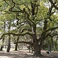 苔で覆われた幹