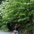 Photos: ヤマボウシ咲く径