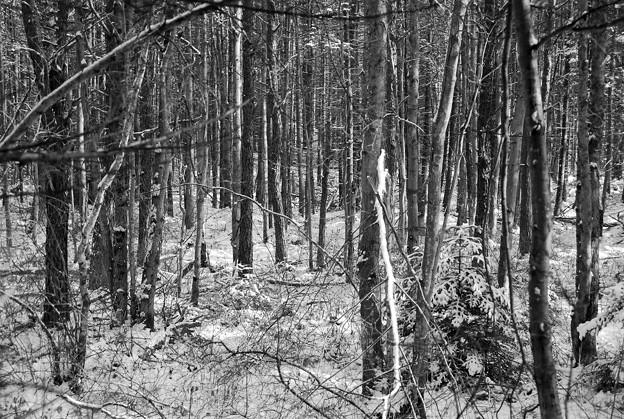 写真: In the Woods 1-7-11