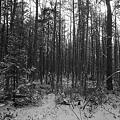 写真: Stopping by the Woods