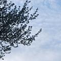 The Sky 4-19-12