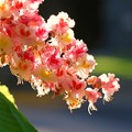 Photos: Red Horse Chestnut II 6-3-15