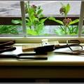 写真: Amy's Tools 6-23-15