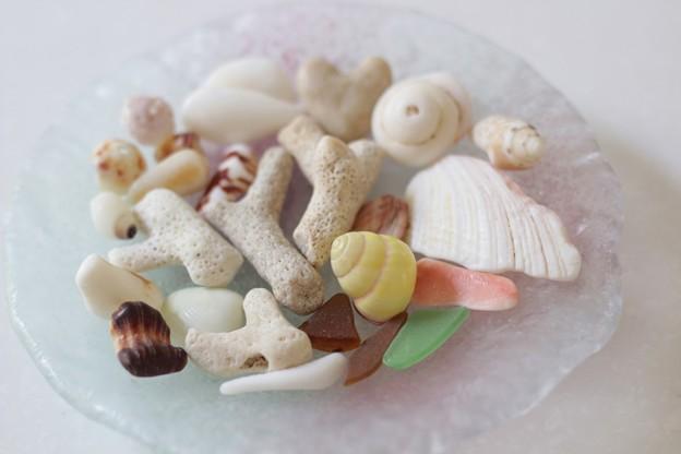 沖縄の貝殻